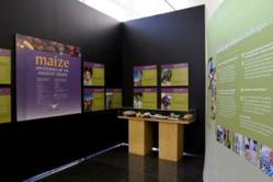 Maize exhibit