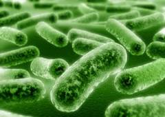 Microbiology @ ScienceIndex.com