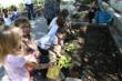 Children gardening in the new raised veggie beds