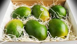 I Love Mangoes