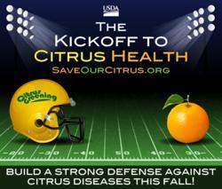 Citrus Greening; Citrus Diseases; HLB; Citrus Health