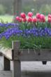 Five Ideas for Fall Bulb Season from Longfield-Gardens.com