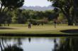 The Island Green at Tubac Golf Resort & Spa