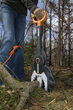 WORX JawSaw clearing brush.