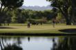The Island Green at Tubac Golf Resort & Spa