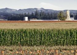 Congress skips town, farmers prepare for return to 1949 farm policy