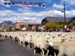 Fun for the Entire Family at the 16th Annual Trailing of the Sheep...