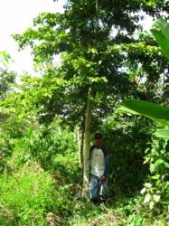 Photo of a Planting Empowerment employee standing with a yellow-wood tree