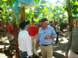 Frutera, farm, Canadian Ambassador, Guatemala, CSR, banana production process, banana plantations, Escuintla