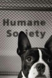 Acclaimed Movers Donates to Humane Society