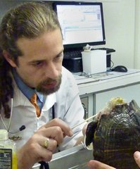 Veterinarian that recomments pet health insurance examines turtle