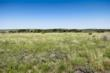 An extensive Mesquite and Cedar control program has been completed on the entire ranch, resulting in improved native grass cover.