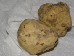 Buy white truffle mushrooms