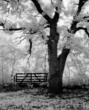 Lee Rentz: Heaven's Gate