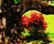Ken Beerger: Azalea in Spring
