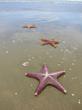 Dario Sartini: Starfish on the Beach