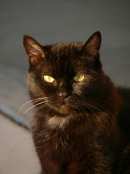 Five Pet Place Napa Cat Products