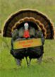 This is a Business Thanksgiving Greeting Card with an image of a Turkey.