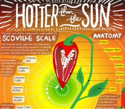 How to grow your own chilli peppers, infographic