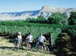 Biking in Colorado Wine Country