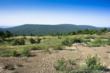 Oklahoma ranch for sale, acreage for sale in Oklahoma, timber harvesting