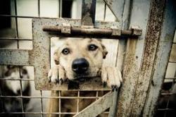 rescue animals, animal advocacy,animal euthanasia,animal rights,gas chamber euthanasia,Grace's Law,animal rights advocates,shelter dogs,
