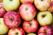 Apple Lovers, Get Ready for Apple Season!: U.S. Apple Association Reports an Abundance of Apple Varieties on the Way