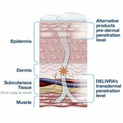 Diagram showing how LivRelief Transdermal cream is different and more effective.