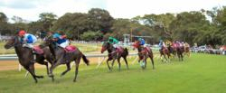Polo and Horse Racing Heritage Tourism in Barbados