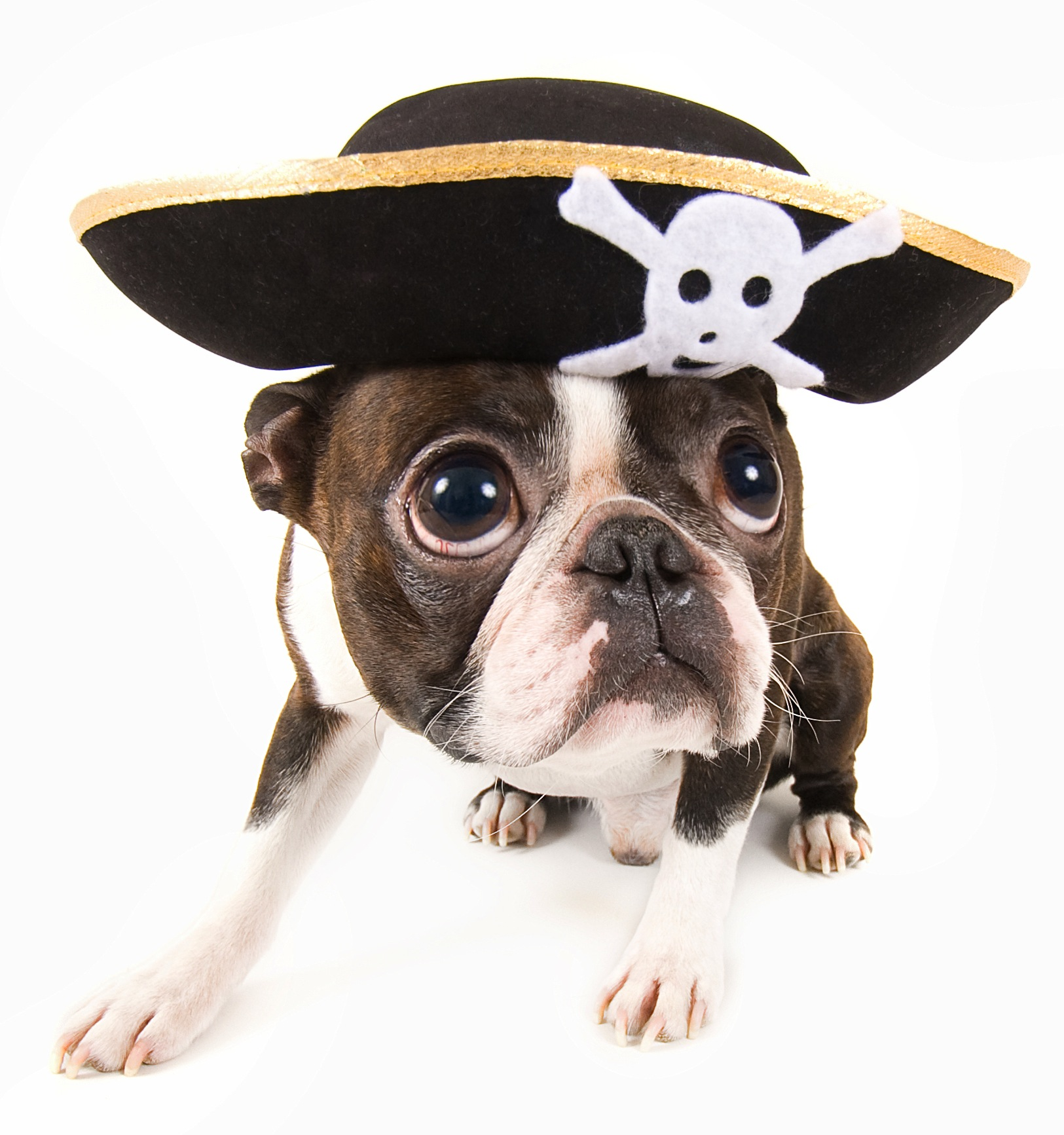 Pet Insurance Companies >> Halloween Pets Photo Contest: Win $1,000 for a Favorite Animal Shelter