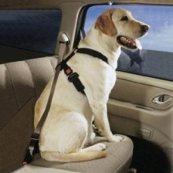 seatbelts for pets