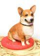 Corgi Dog Cake