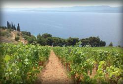 A vineyard off the coast of Croatia. HRWines is giving Florida merchants and restaurant owners a distinct new taste to offer their audiences.