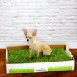 A New Product, Fresh Patch, Helps Protect Small Dogs and Puppies