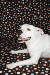 Celebrities and Their Pit Bulls at the Center of National Pit Bull Awareness Campaign