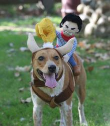 one of the costumed critters entered in petstorecoms inaugural halloween pet costume contest