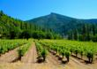 Alpen Cellars produces estate wines on 17-acres.