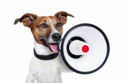 Pet Parents Rejoice! Find Out What One Website is doing to Ensure Your Dog's Safety!
