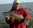 Walleye Dreams Become A Reality Every Fall On Devils Lake And The...