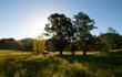 Key Land Purchase Expands Open Space Authority Preserve in Southern Santa Clara County