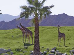 The Living Desert in Palm Desert California
