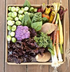 Heirloom Family Box