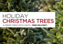 The Garden Gates Fraser Fir Christmas Trees