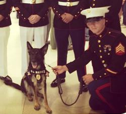 Military Working Dog Rambo with fellow Marines