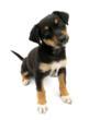 All Treat No Trick: Halloween Adoption Event, Winnipeg Humane Society...