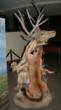 Draper Museum of Natural History