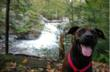 Dog Wireless Plus Online Store Adds Video On Site and Begins Video...