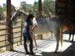 One of Alexandra Gritta's favorite volunteer activities is grooming rescued horses at the Duchess Sanctuary.
