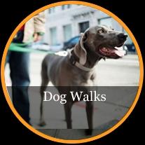 Dog Walking and Pet Sitting Company