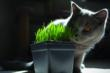 Dont forget our furry friends this holiday with catnip from The Growers Exchange